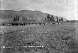 Photo en noir et blanc d'un champ avec des vaches sur un fond d'arbres et de collines.