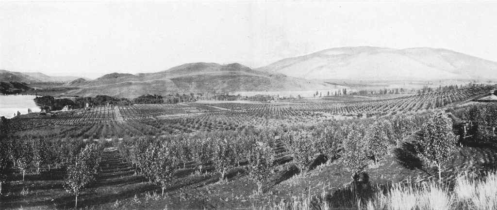 Black and white photo of a large fruit orchard with a view of the lake and distant hills.