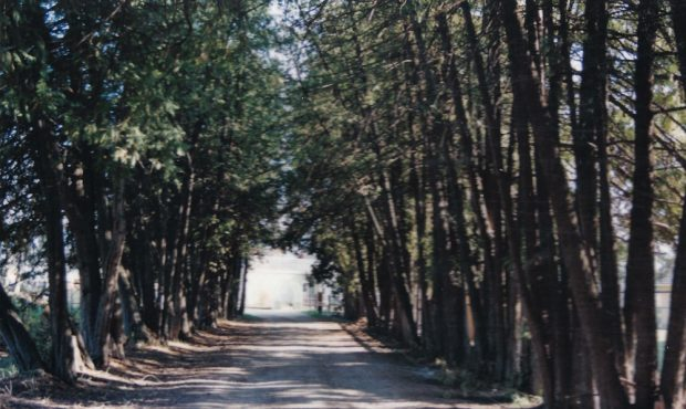 Colour photo of a road with large overhanging trees with an opening at the end of the lane.
