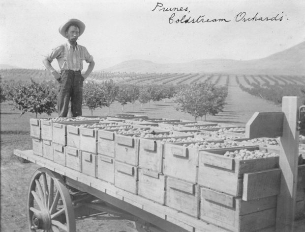 Black and white photo of a man standing at the back of a flatbed wagon loaded with boxes of fruit.