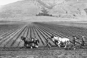 Black and white photo of rows of low crops running towards the hills in the background. There are two horses with three men plowing the fields.