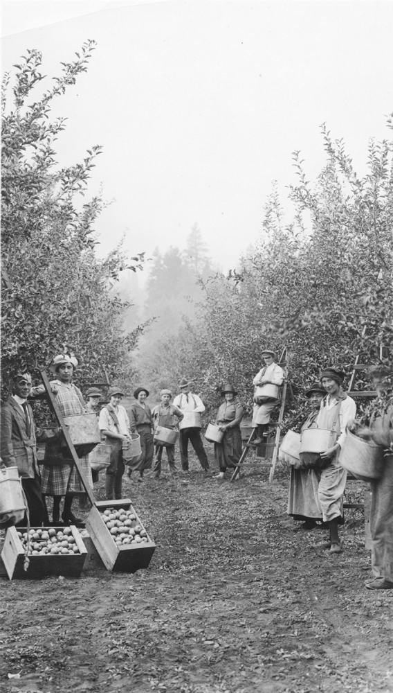Black and white photo of twelve men and women in an orchard, displaying boxes of apples and picking bags.