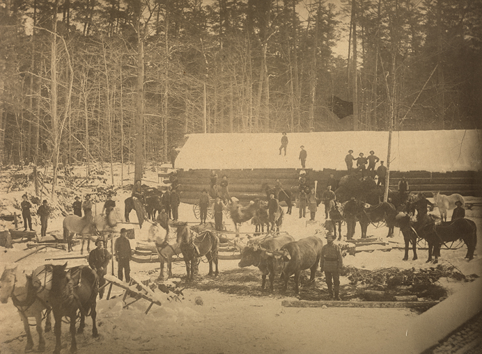 Sepia-tone photograph of a winter scene in a lumbermen's camp. In the middle ground is a long windowless building of log construction, its roof covered in snow. In front of the building are thirty or so men, a dozen horses and two yoked oxen. In the background is a forest.