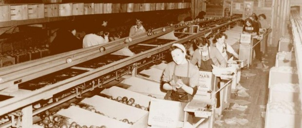 Sepia photo of women working inside an old building. They are selecting, wrapping, and packing apples.
