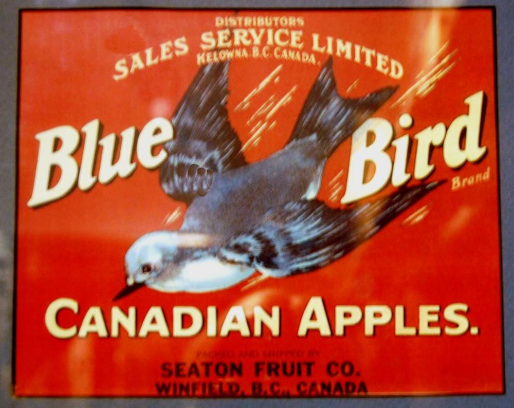 Photo en couleur d'une étiquette de caisse de pommes de la marque Bluebird provenant de la station fruitière Seaton de Winfield. L'étiquette représente un oiseau bleu en vol sur fond rouge.