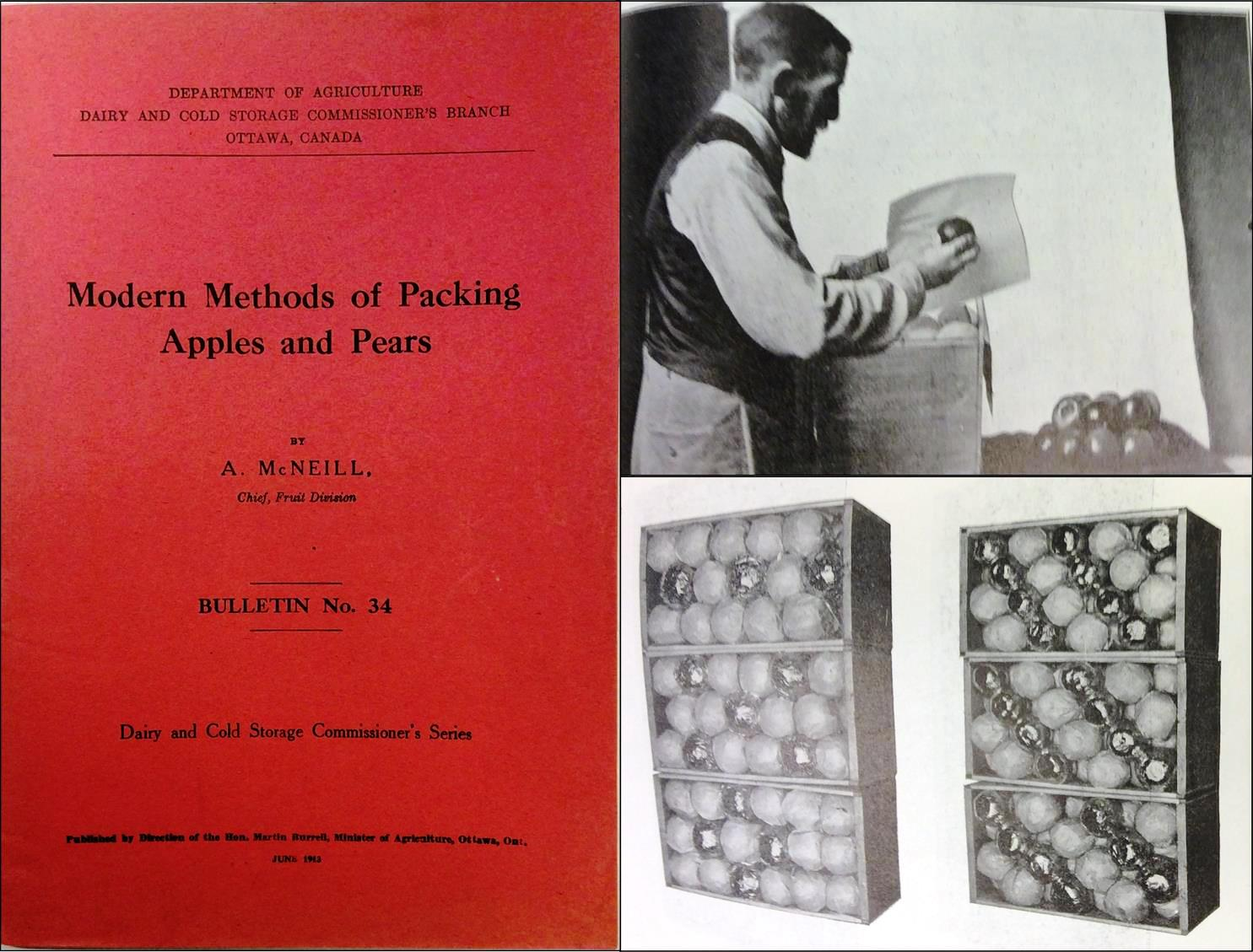 Three part photograph of a booklet. The left section shows the red booklet cover, titled Modern Methods of Packing Apples and Pears, by A. McNeill, Chief, Fruit Division. Published by Direction of the Hon. Martin Rurrell, Minister of Agriculture, Ottawa, Ont., June 1913. Black and white photo top right shows a man wrapping an apple in tissue. Black and white photo lower right shows six packed apple boxes with apples packed in different patterns.