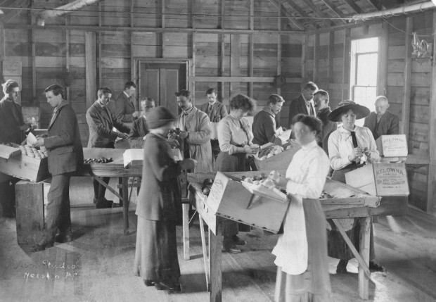 Black and white photo of four women and eleven men, each standing at a packing station along one side of four tables. Each table has a burlap centre filled with apples from which they select an apple, then wrap and place it in a raised box in front of them.