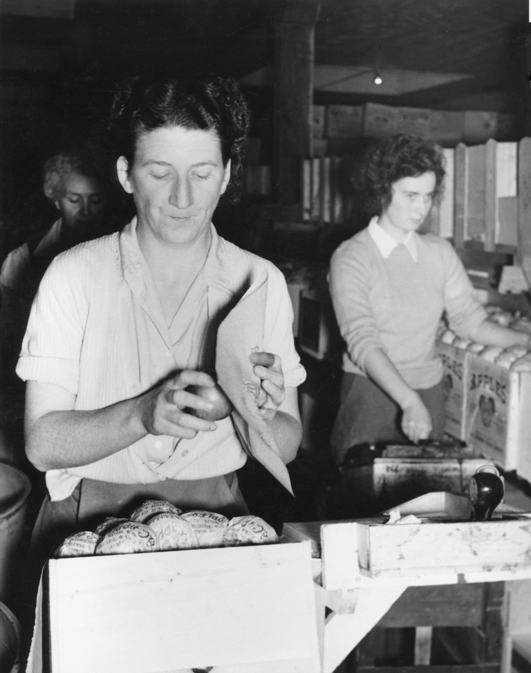 Black and white photo of three women inside a fruit packinghouse. The woman in the foreground is wrapping an apple in tissue.