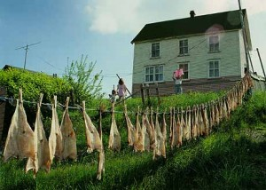 Cod fish hung out to dry In the background a white wooden house. A woman is hanging laundry and two children, holding hands, watch her.