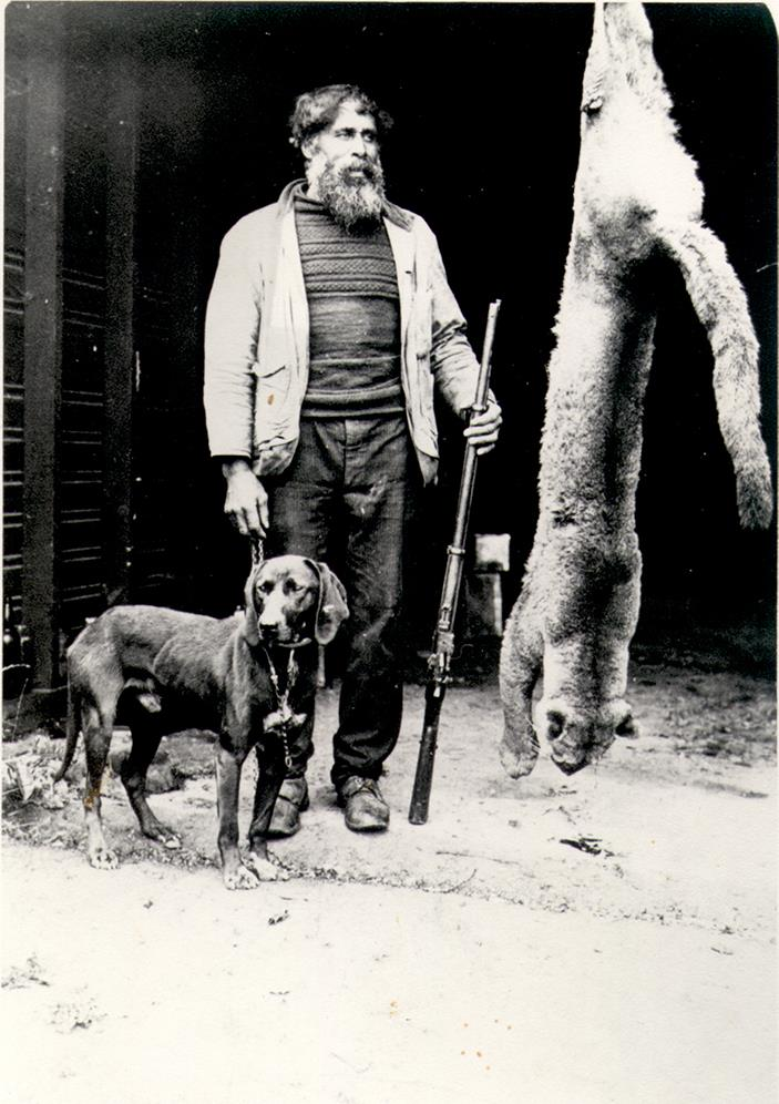man with full beard, holding rifle upright, dog to the left, cougar carcase hanging on right, estimated length paws to tail is 9 feet.