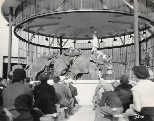 Black and white photo of circus elephants under a large cage with a circus performer doing a hand stand on top of an elephant in front of seated audience