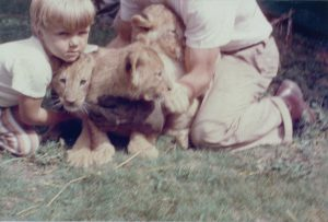 A child and an adult handling three lion cubs