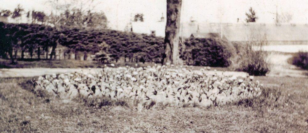 image de ton sépia d'un lit circulaire de fleurs avec un seul arbre derrière elle.