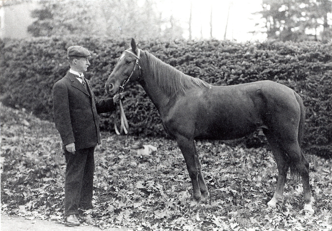 Black and white picture of a man dressed in a suit holding the reins of a smaller horse. They are standing in front of a cedar hedge on a gravel path.