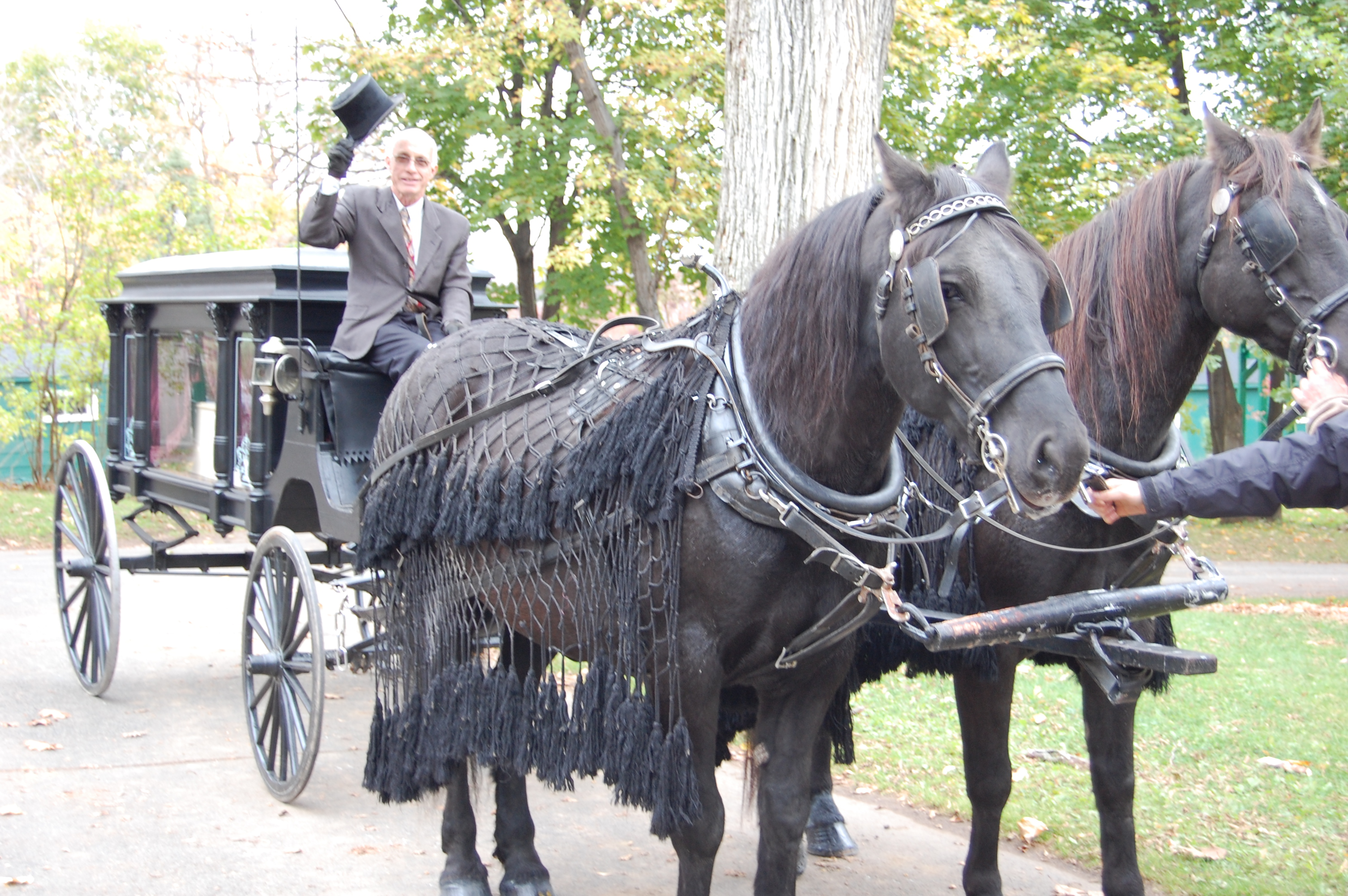 Coloured picture of a man sitting in front of a horse drawn hearse with two large horses.