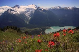 Red, purple and yellow alpine flowers grow on the steep slopes looking down toward the glacial blue water of Cheakamus Lake. The glacier covered peaks across the valley glisten in the summer sun.