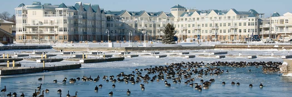 in foreground of this panoramic photograph is blue water with many Canada geese, beyond them are deserted boat slips in icy water and on shore a large white four-story condominium building with blue roofs