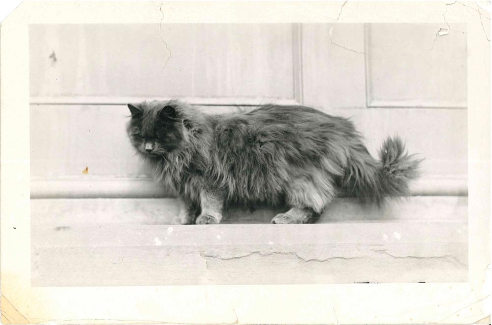 Photo of David, the Persian kitten