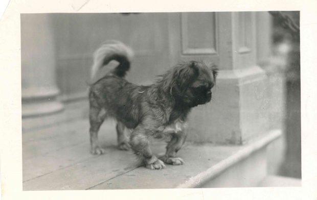 Photo of dog on Mission room steps