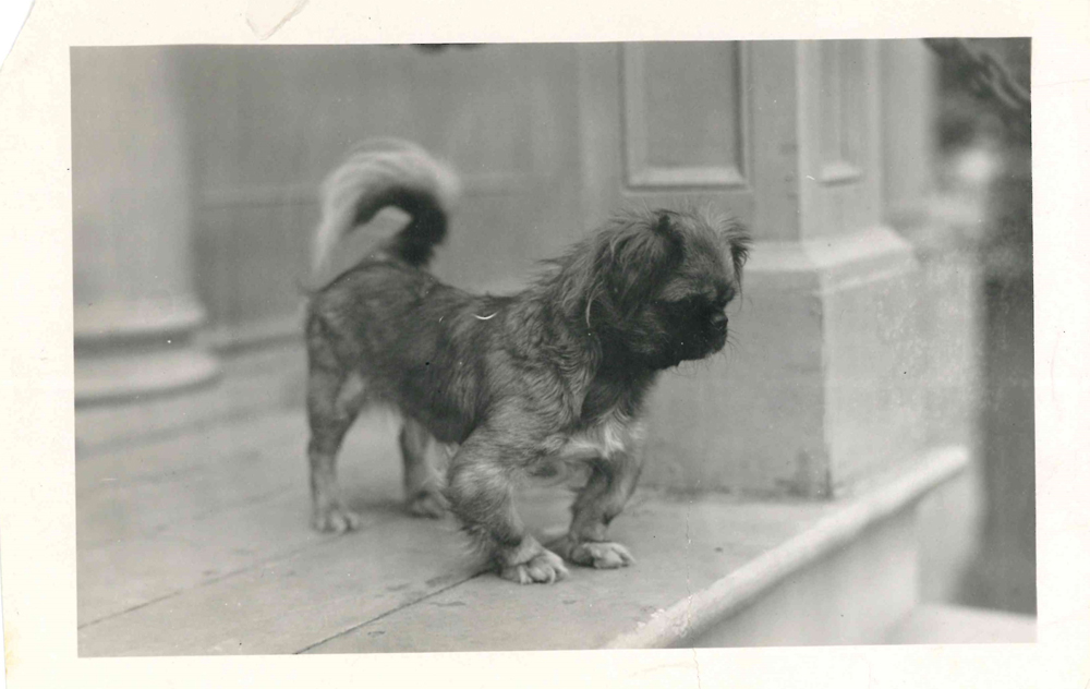 Photo of dog on Mission room steps