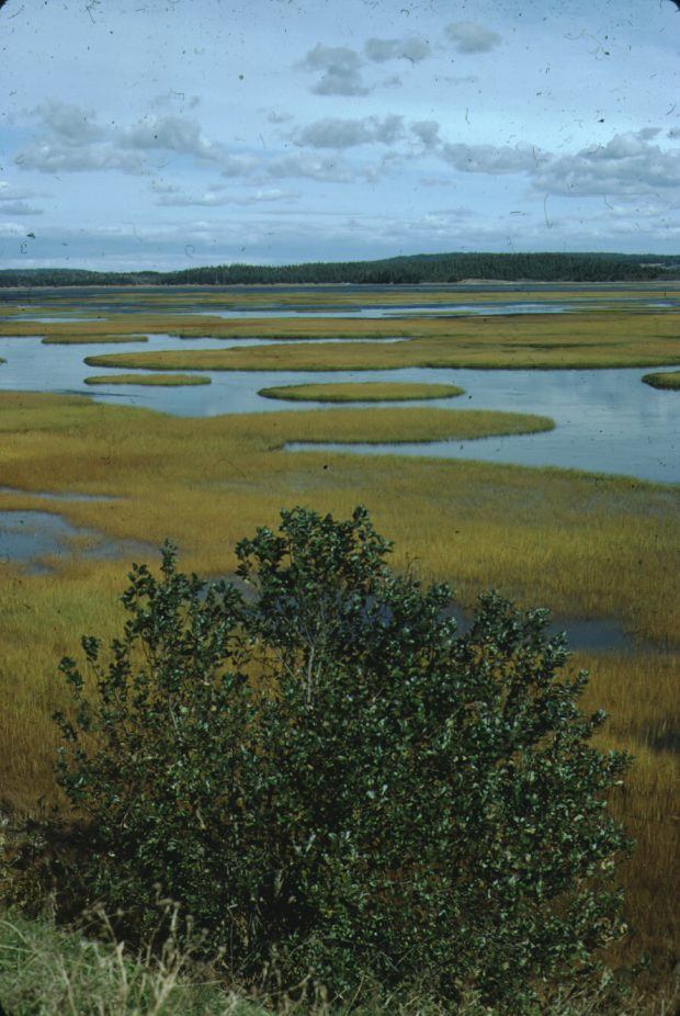 Marshes in Chezzetcook