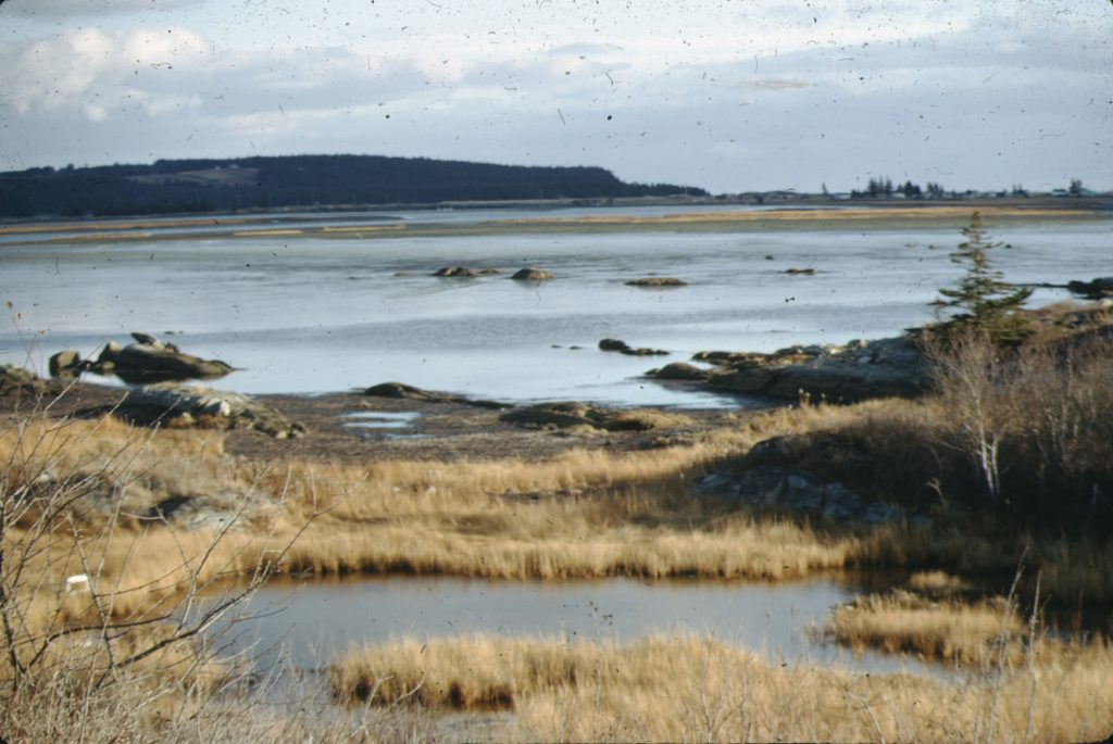 The Cole Harbour salt marsh