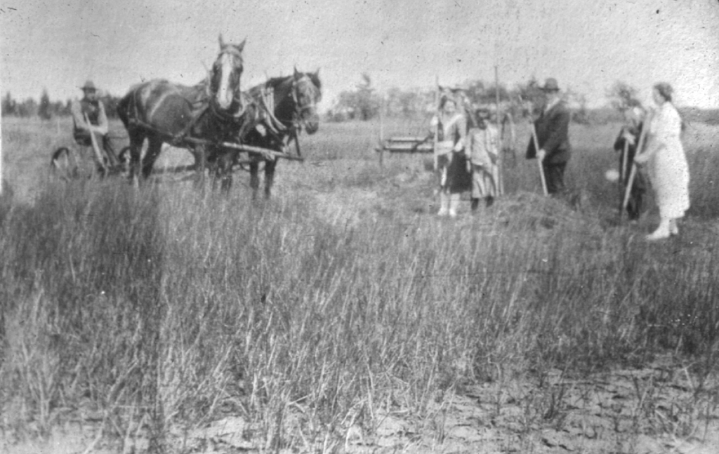 A group of people cutting hay, with one person seated on a horse-drawn mower
