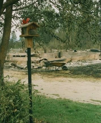 Mangeoire d'oiseau sous un arbre entouré de verdure. Derrière, une fondation, une brouette et de la cendre.