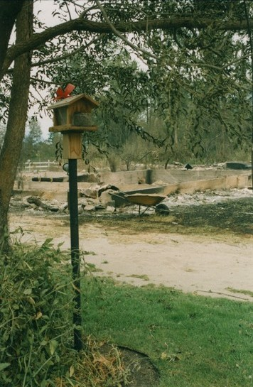 Bird house under a tree with greenery around it. Beyond is a foundation, wheel barrow and ash.