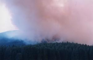 Fire burning in forest hillside.