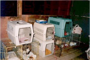 Cats in cages stacked 2 high.