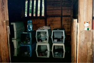 Cats in cages in a barn.