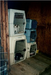 Cats in cages stacked two high.