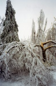 The ice increased the weight of the branches until they eventually break.