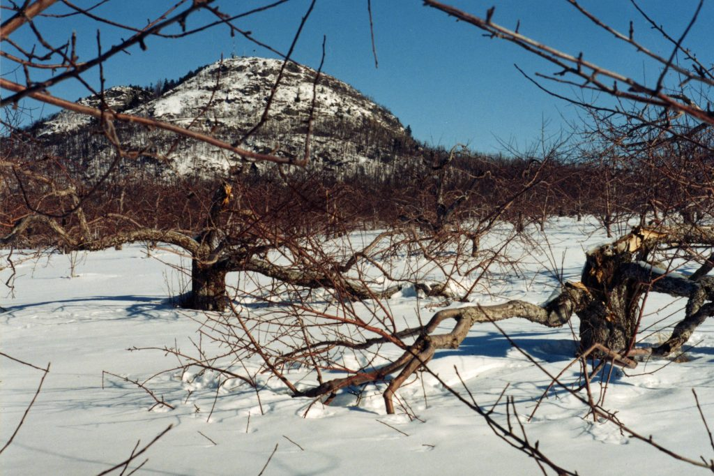The appletrees broke under the weight of the ice at Mont-Saint-Grégoire.