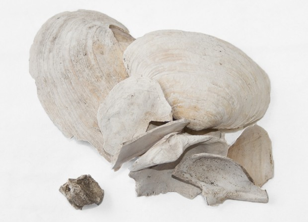 Fragments of white bones and mussel shells from the early 1800s.