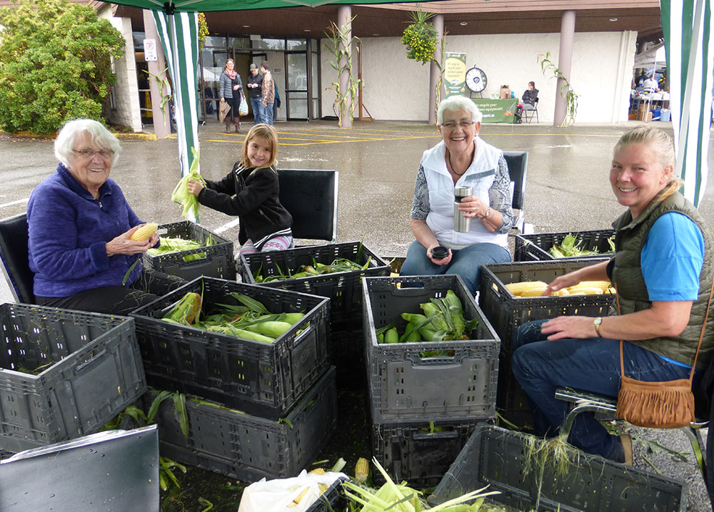 Colour photograph of three women and a girl shucking corn. They are surrounded by piles of grey crates, filled with corn, stacked knee high.