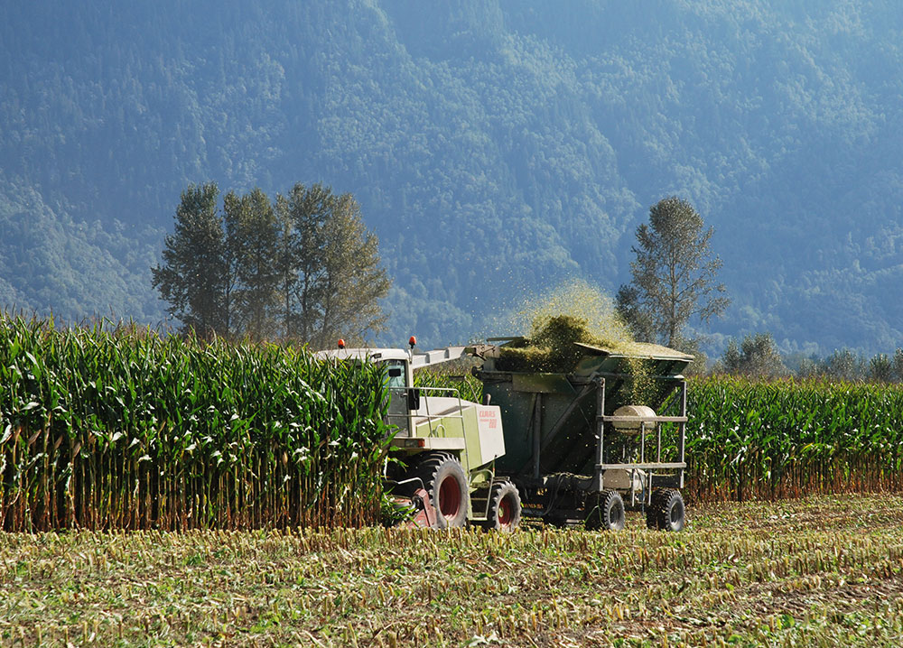 Colour photograph of a tractor harvesting corn with mountains in the background. The silage is blown into a wagon behind the tractor.