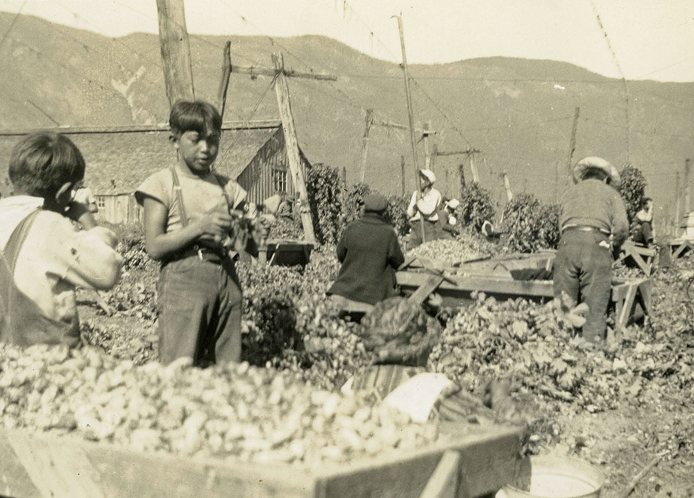 Black and white photograph of children and adults working in a hop yard. Full crates of hops are in the foreground and background.