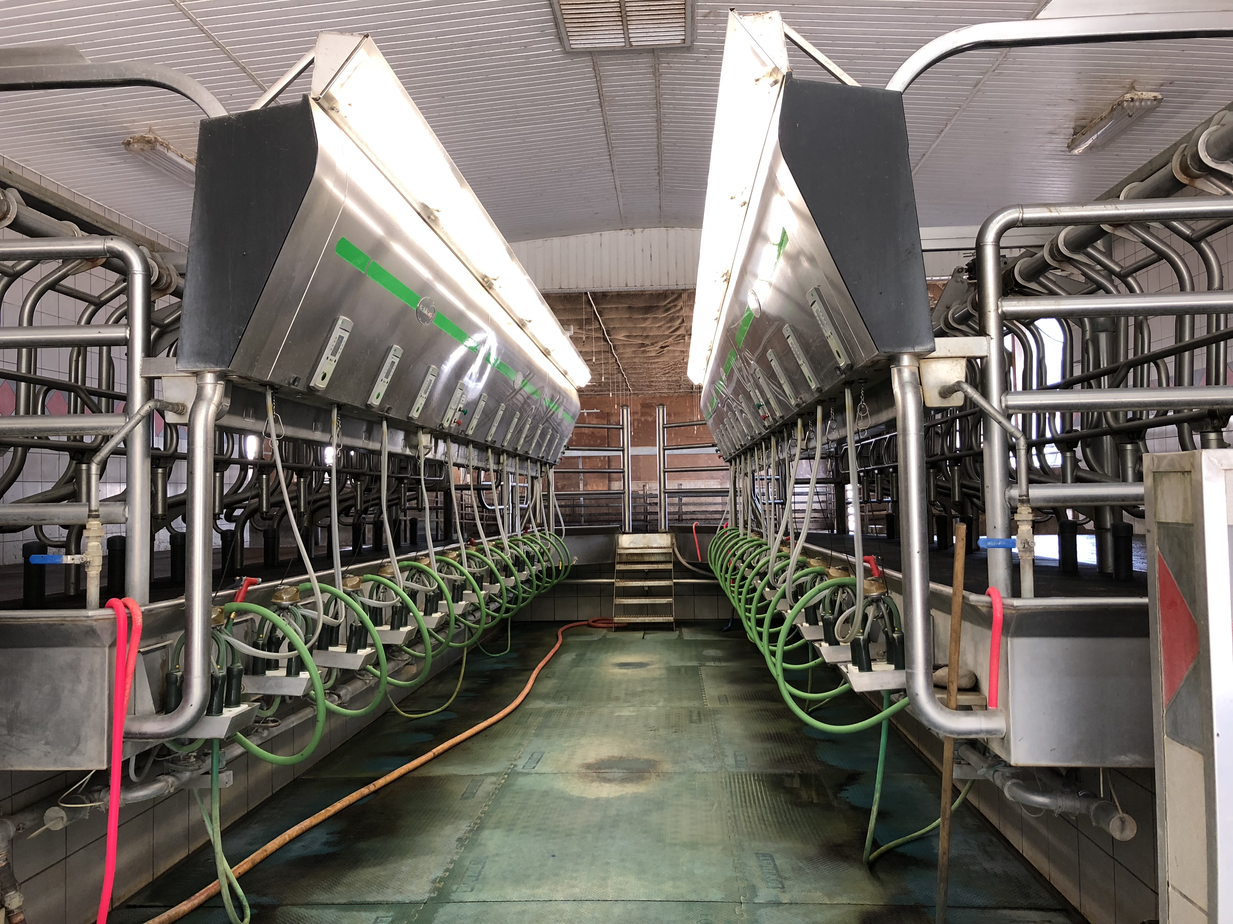 Colour photograph of a stainless steel milking parlour.