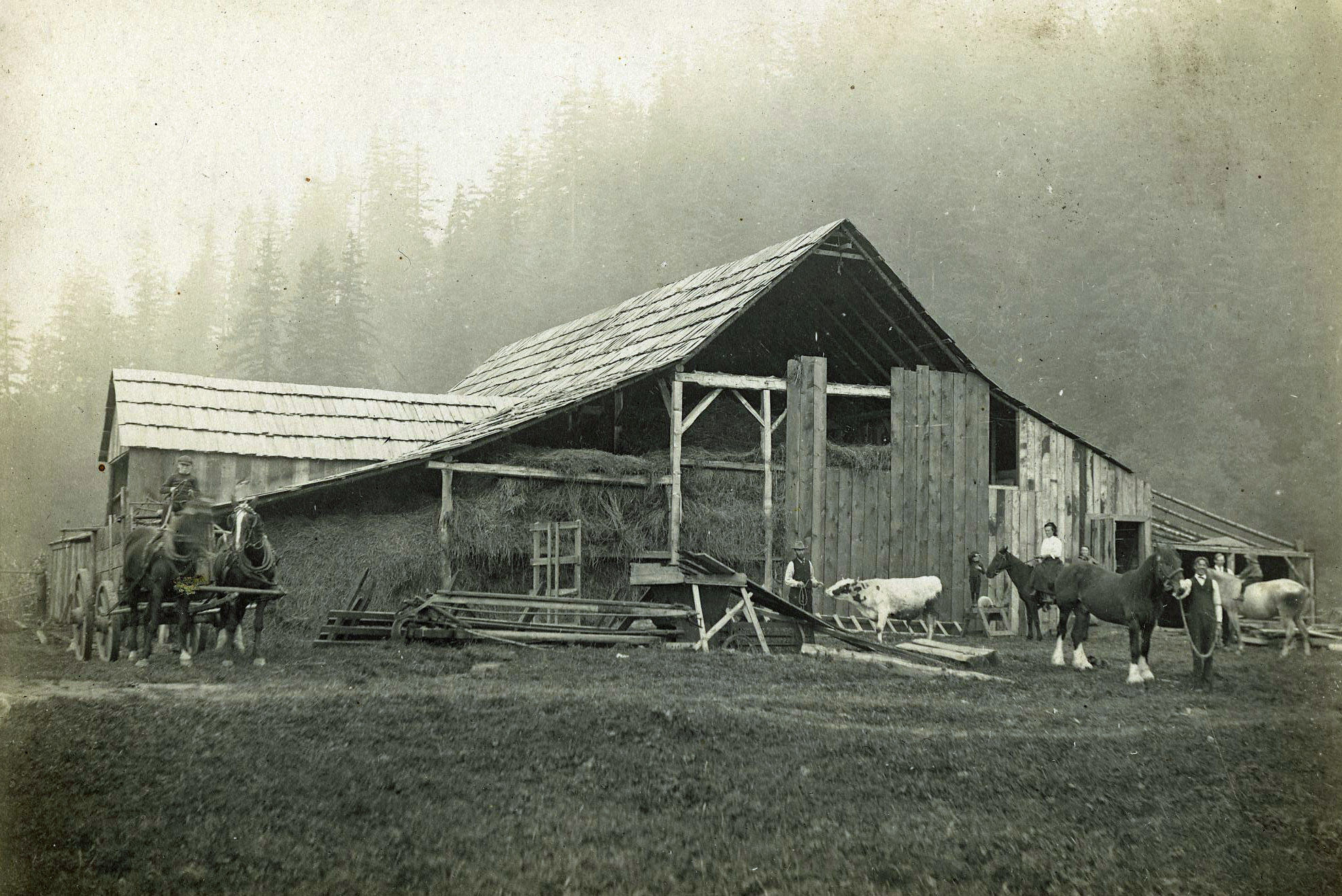 Black and white photograph of work horses and cows in front of a barn filled with hay.