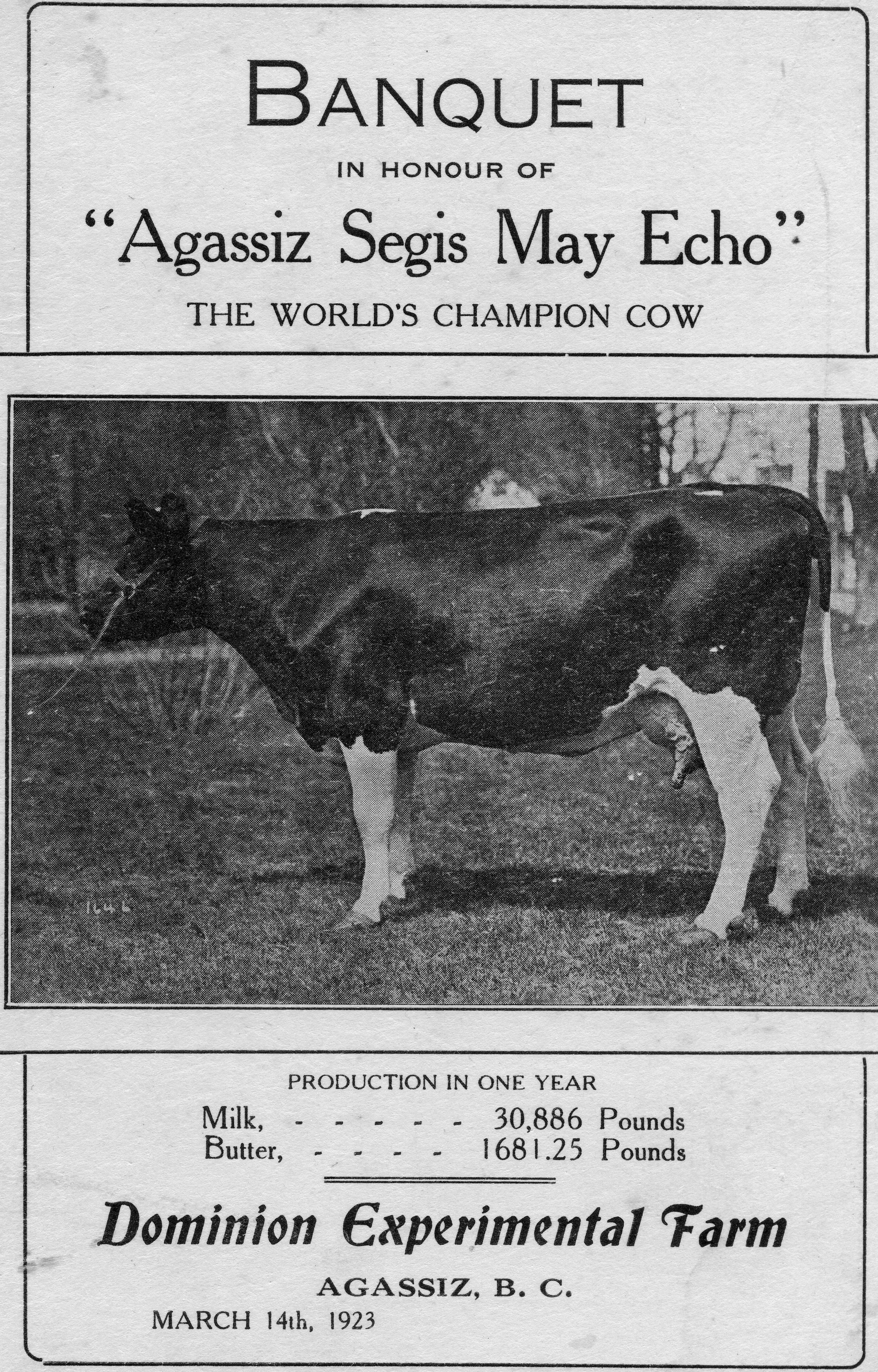 Black and white image of the banquet program for Agassiz Segis May Echo. Includes a picture of the champion cow, 1923.