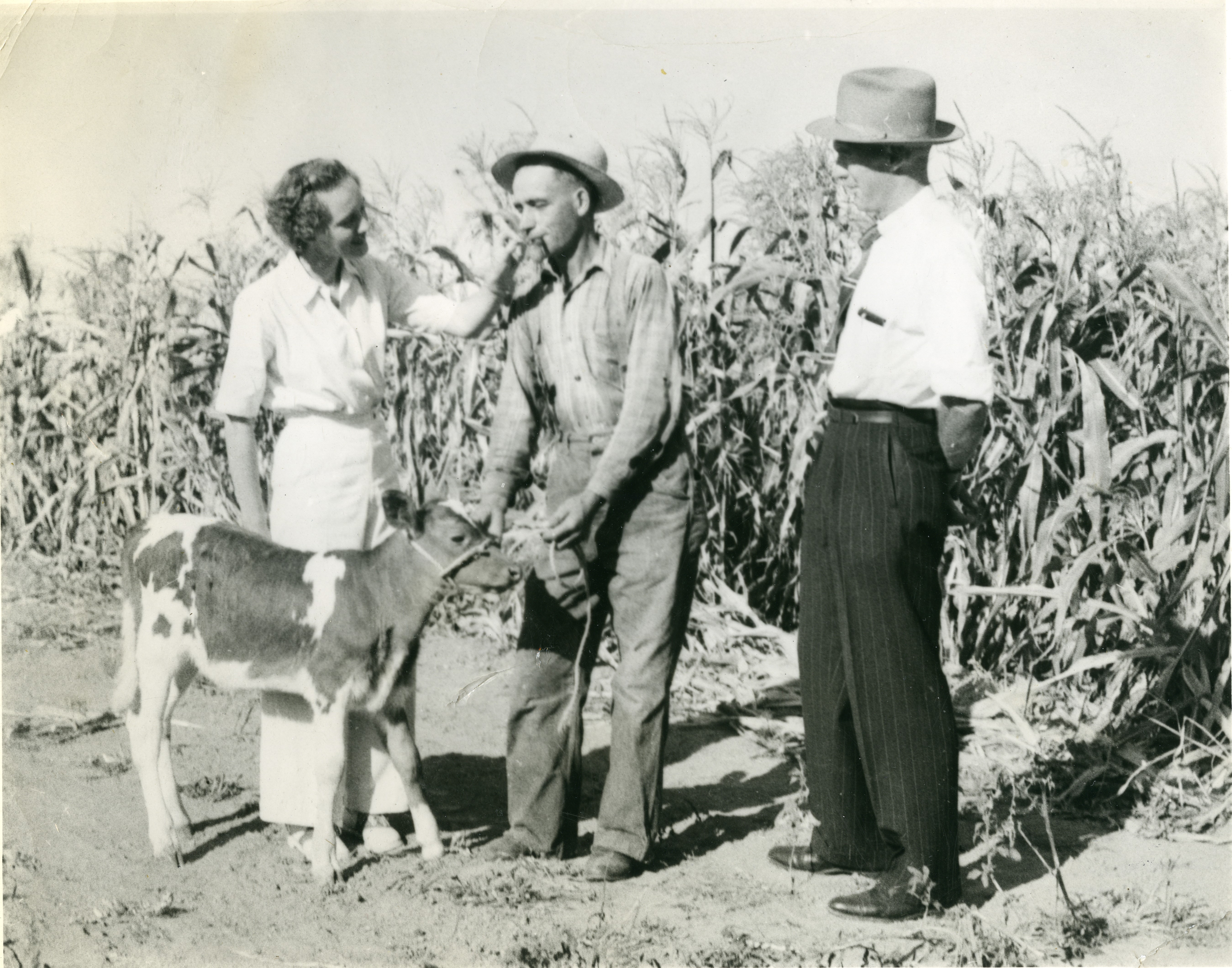Black and white photograph of a woman and two men standing in a corn field with a young calf. The woman is wearing a white outfit and the men are dressed in shirts and pants with hats.