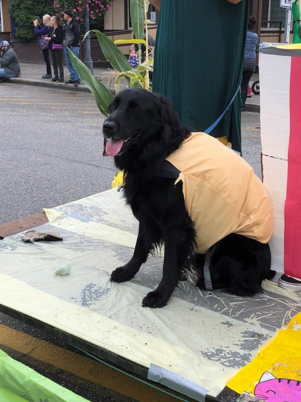 Colour photograph of a black dog dressed as a corn dog on a parade float.