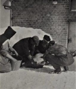 Photo en noir et blanc de trois hommes agenouillés dans la neige autour d'une bête, avec une femme en habit religieux tenant un sceau.