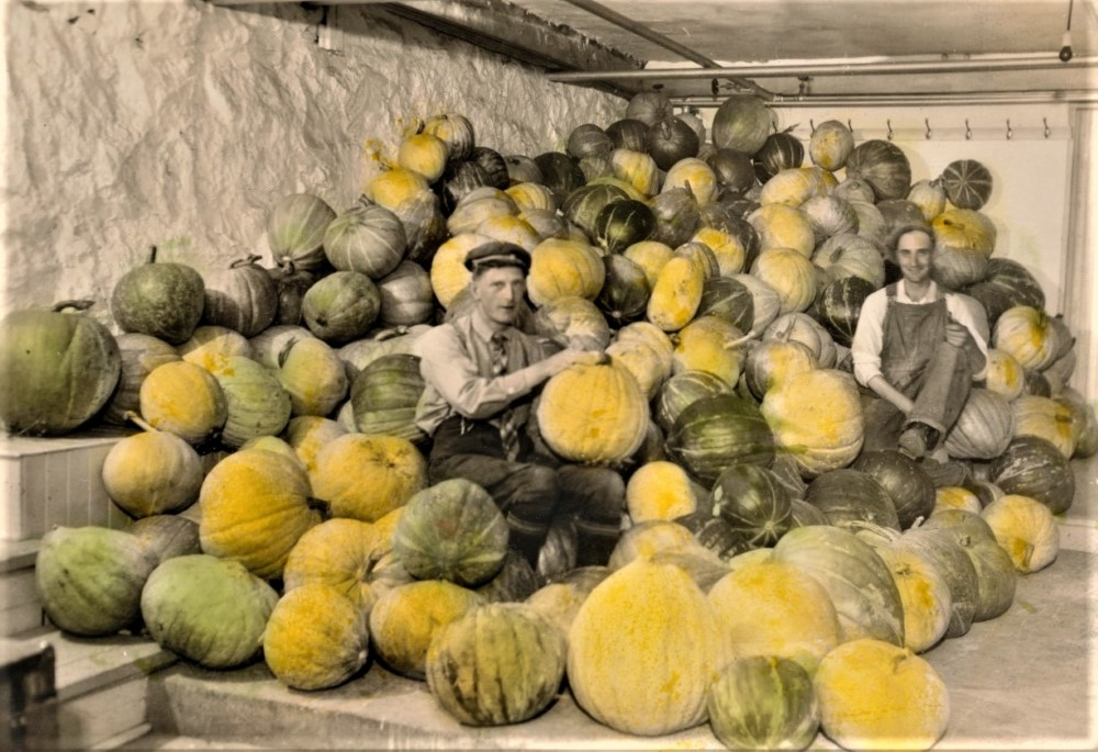Black and white photo of two men sitting among pumpkins that have been hand coloured yellow and green.