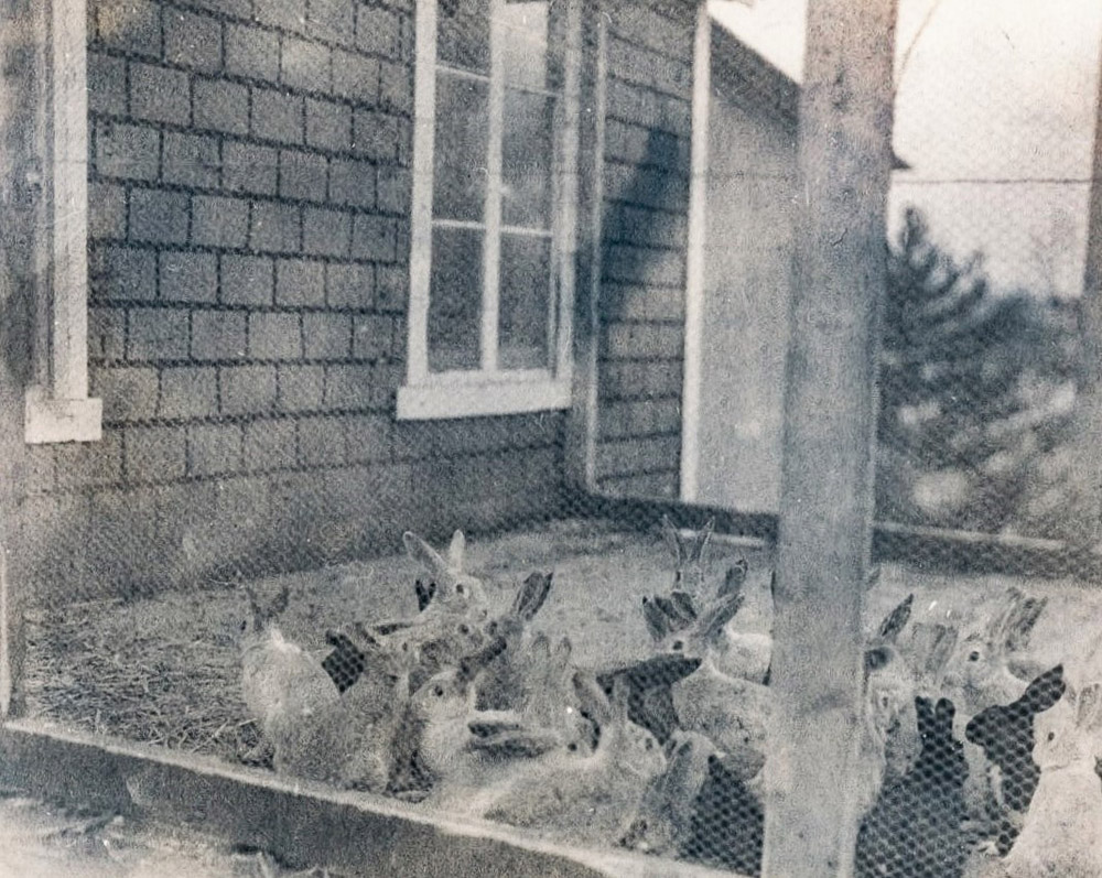Black and white photo of rabbits in an enclosure.