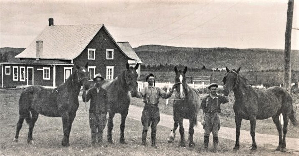 Black and white photo of three men with four large horses.
