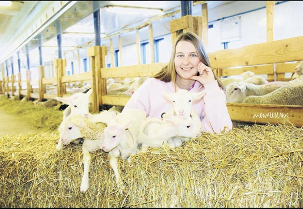Young woman with ewes in a barn.