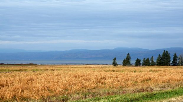 Countryside landscape in autumn; golden fields, fir and spruce grove, river and mountains under a slightly shaded sky.